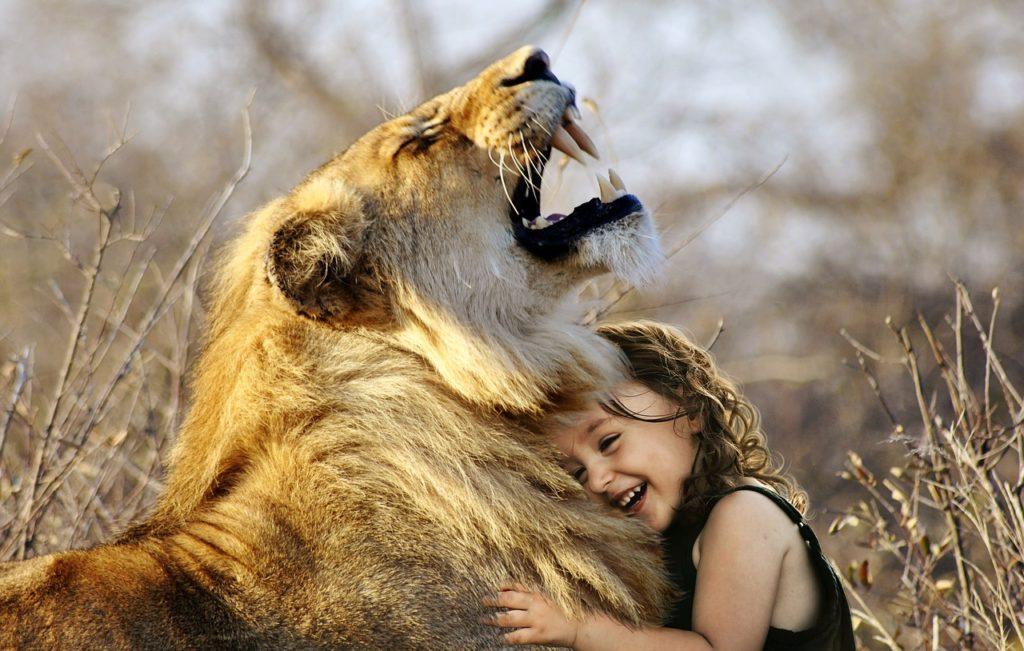 a Leven in liefde en waarheid lion-3012515_1280.jpg pix
