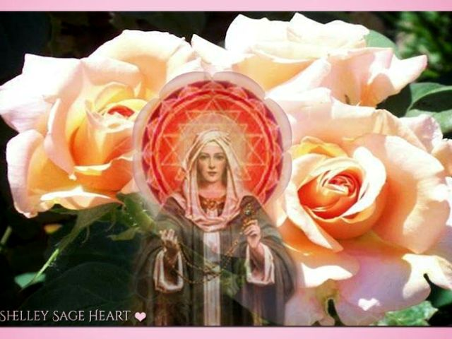 sacred is the rose shelly sage